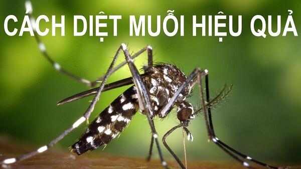 Làm thế nào để không còn muỗi