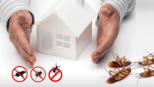 Kiểm soát sinh vật gây hại định kỳ